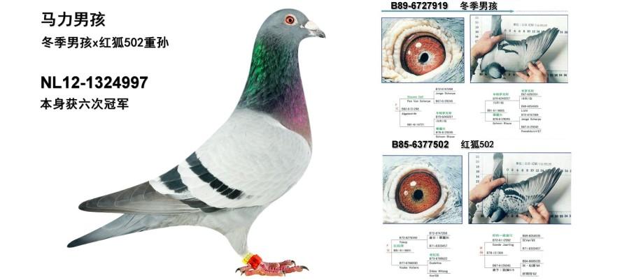 詹森八大配对 图片来源:116工作室-德国优纳 JONA.COM.CN 专业的